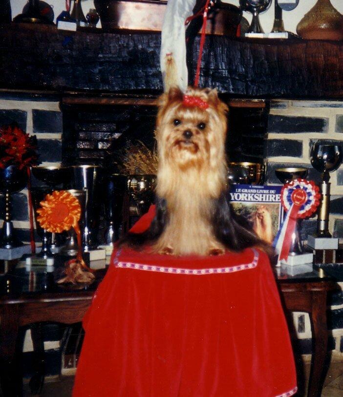 VALENTIN de la PAM'POMMERAIE 1984