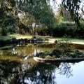 reflets dans le bassin