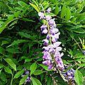 Fleurs de Leon 24061617