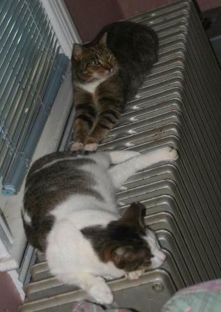 Emily and Six Toe on radiator