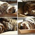 Elle est pas belle la vie... d'un chat!!!