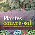 plantes couvre-sol barbara w