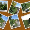 Taille d'automne dans mon jardin