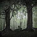 L'If, un <b>arbre</b> qui veille sur l'âme des défunts