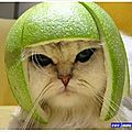 Funny-pictures-of-animals-funny-cat-3