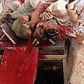 L'abattage rituel selon le Coran
