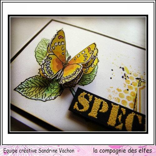 Carte Specimen Sandrine VACHON DT LCDE (4)