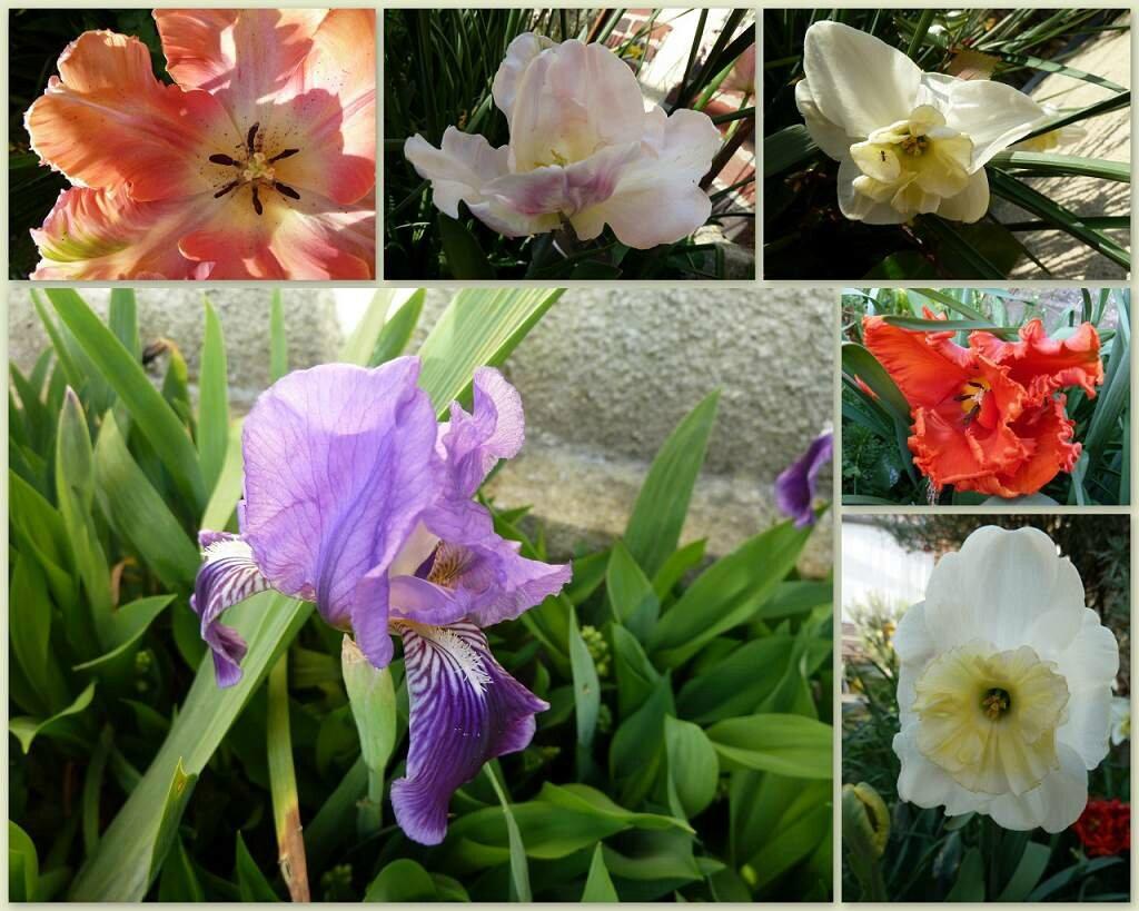 2015_0415_jardin_sml