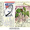Page d'herbier de poche n°27