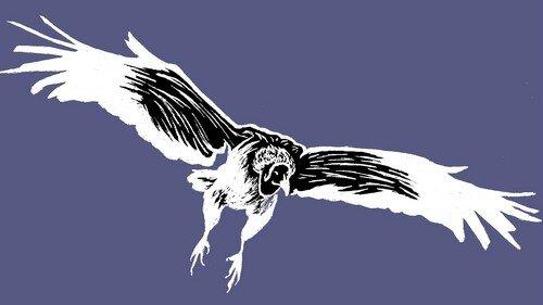 Oiseau-Tonnerre-vautour--L500