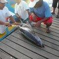 débarquement de la pêche du jour