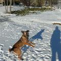 2009 01 13 Kapy et la boule de neige loupé