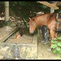 Lascaux et les chiens vers Chatillon de Cornelle