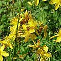Les fleurs de l'été (5)