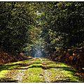 Compte-rendu : excursion mycologique en forêt d'orléans 2015