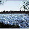 Lac Soustons 07031511