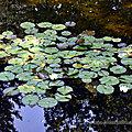 Collection de... eau - 2021-07-26 - Bois-de-<b>Coulonge</b>
