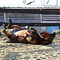 Faire plaisir à son <b>cheval</b>