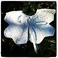 Gilet papillon #2