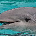 Pour galéo il y a urgence, la situation des dauphins à