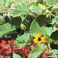 Fleurs éthériques - niveau 1 et niveau 2