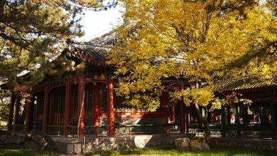 4 pinsons à Pékin