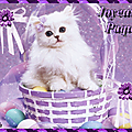Joyeuses pâques à tous !! :)