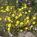Sète - fleurs 6