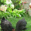 Deux nouvelles au jardin ...