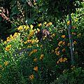 <b>Lieve</b>'<b>s</b> <b>Garden</b>. Le jardin de la famille Baeyens-Pots