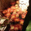 Florissimo Dijon 2010 fleurs exotiques variées