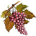 Zoom sur le vin bio