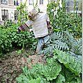 potager pédagogique jardin des plantes 2