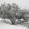La garrigue sous la neige le 11 février 2012