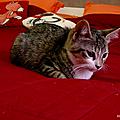 Myrtille, presque 3 mois, nouvelle habitante! miaou!