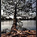 lac de la magdeleine (6)