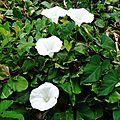 Fleurs de Leon 2406162