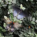Battements-d'ailes
