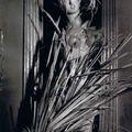 Brassaï (gyula halasz, dit), nymphe pour une vitrine de balenciaga, avenue george-v. paille de blé et épis , automne 1957