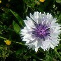 fleur 32