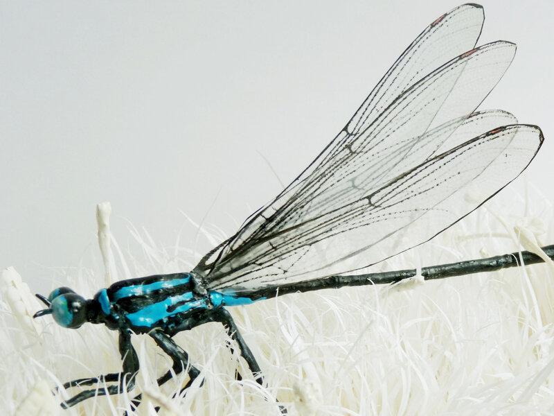 gros plan libellule