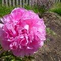 Toujours au jardin .... les nouveautés !
