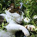 22_w_Virus sieste fleurs_10 06 06_3627