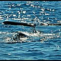 Whale overwater (1)