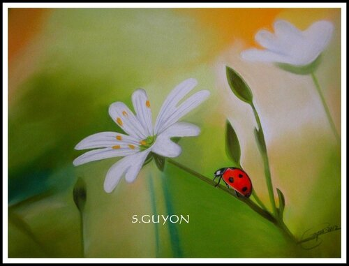 Coccinelle I
