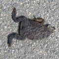 La fete a la grenouille...?