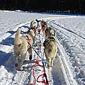 <b>Traineau</b> <b>à</b> <b>chiens</b> ou <b>chiens</b> de <b>traineaux</b>