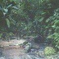 Martinique Forêt tropicale du nord