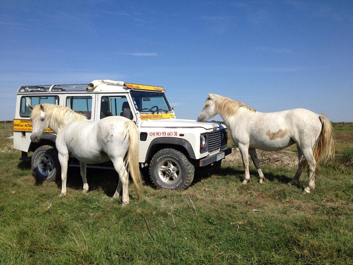 147038820057a457e85aeafcam-alp-safaris-normal-01