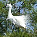 Parc ornithologique du pont de gau 05 2018 - première partie